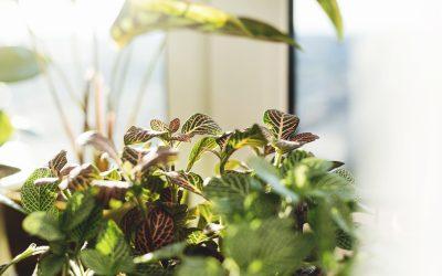 Plant Light Shoebox Maze Experiment